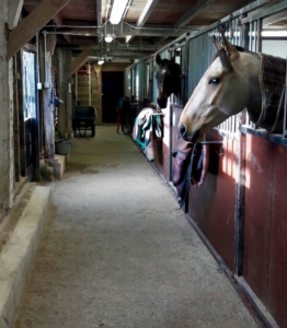 Groom/Rider - Private Yard (847)
