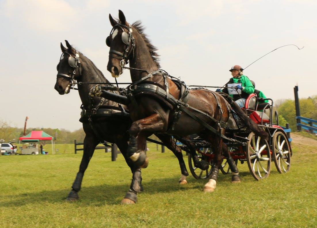 Event Groom - Driving Yard - East Sussex